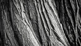 tree-2106115_640